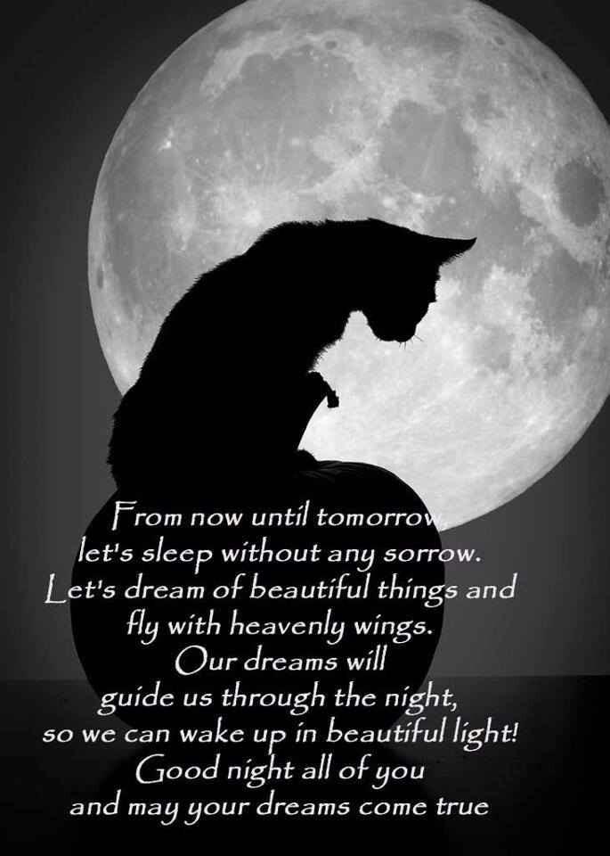 Night Cat Productions: The 25+ Best Good Night Cat Ideas On Pinterest