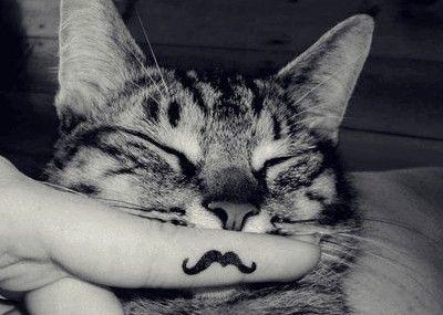 The Cat Moustache