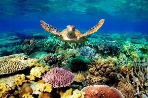 Great-Barrier-Reef Coral