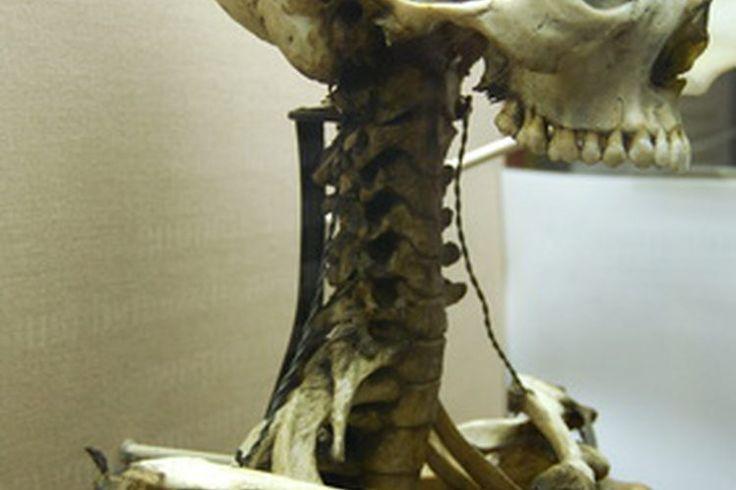 ¿Cuáles son las funciones del esqueleto?   Muy Fitness