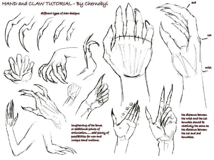.: Hand+Claw Tutorial :. by Chernobylpets | Sketches and ...