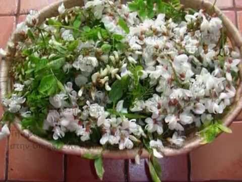 Λουλουδάκια ακακίας αρωματικά, νόστιμα......και τηγανιτά
