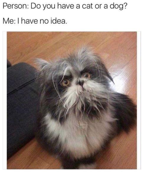 30 Animal Memes