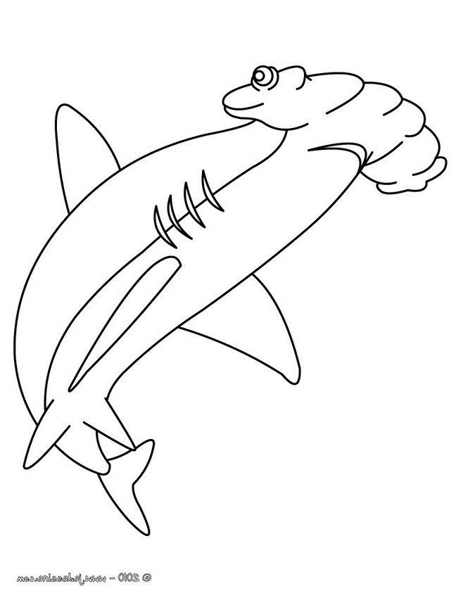 13 Pratique Coloriage Requin Marteau Pictures