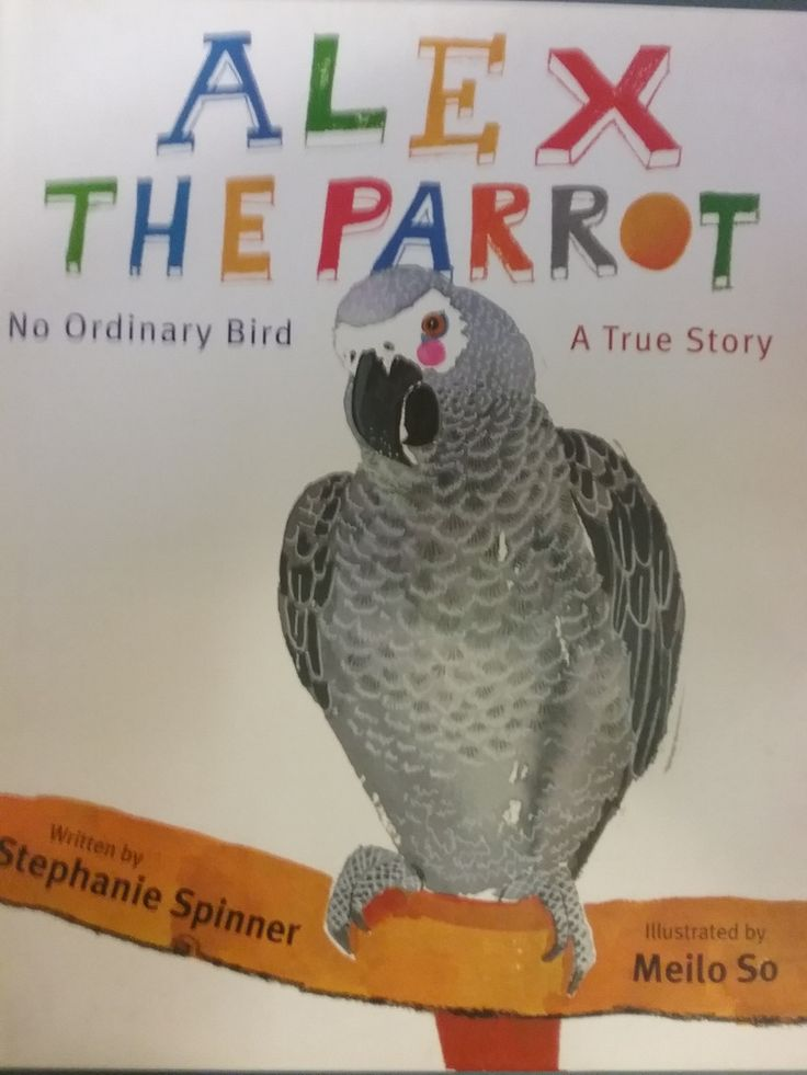 7 best books about friendship images on pinterest baby books alex the parrot by stephanie spinner hardcover fandeluxe Images