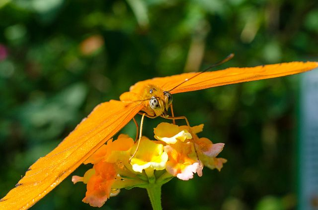 Smart orange | #butterfly #photography #orange #nature