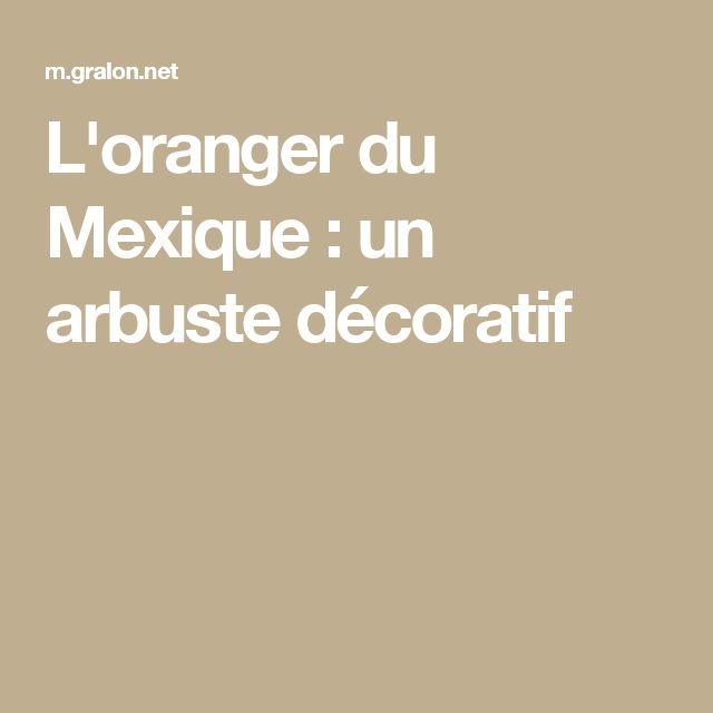 L'oranger du Mexique : un arbuste décoratif