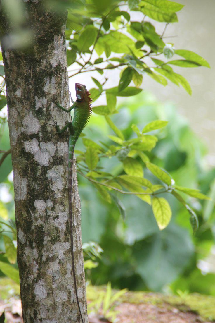 in de tuin bij HomeStay Srilanka