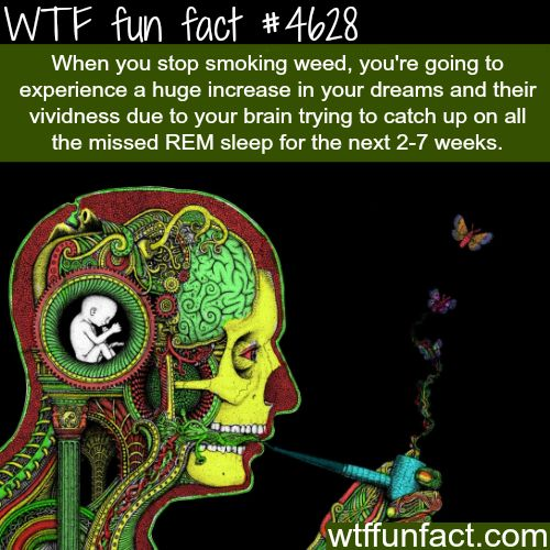 What happen when you stop smoking weed - WTF fun facts