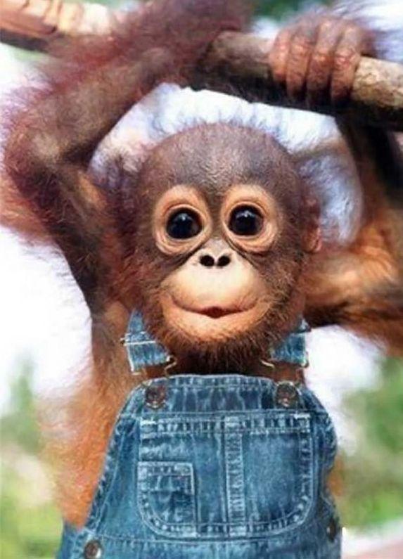 baby monkey: Babies, So Cute, Pet, Babymonkey, Baby Animal, Baby Monkeys, Big Eye, Funny Animal, Baby Orangutans