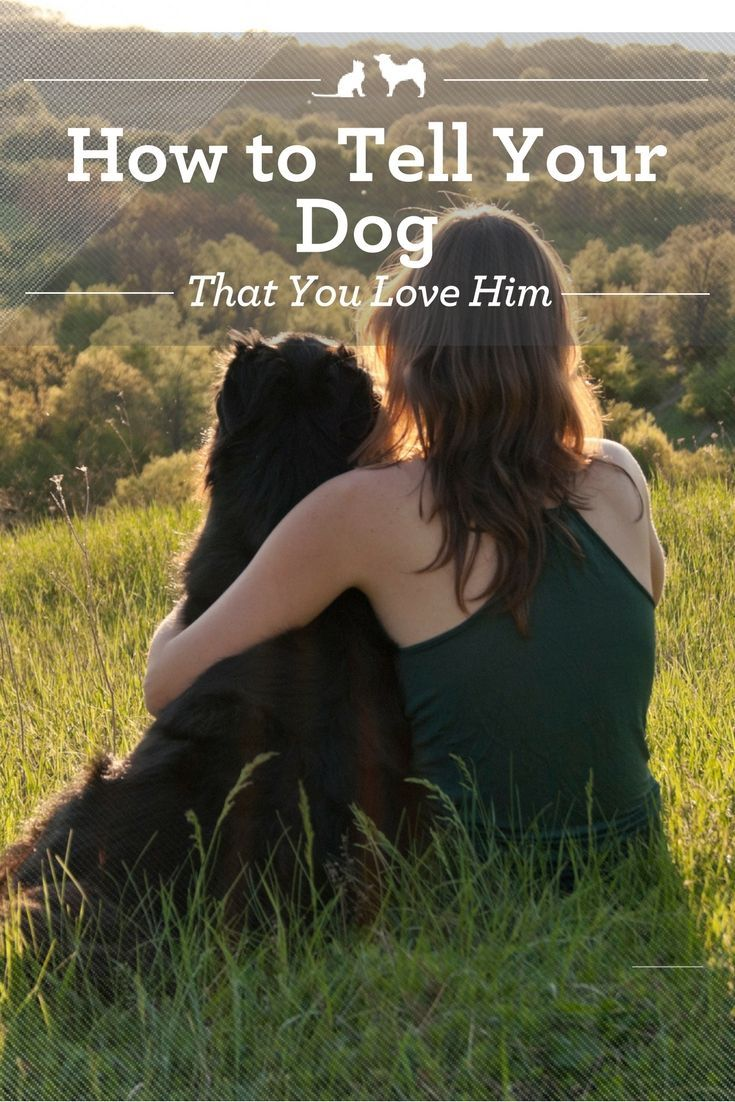 "How to Tell Your Dog You Love Him. You may not speak the same language, but there are still lots of ways to tell your dog how much he means to you. Here are a few ways to say, ""I love you"" in language he's sure to understand. via @kristenlevine"