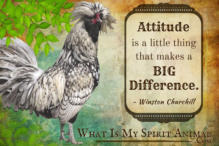 Rooster Quotes & Sayings | Animal Quotes & Sayings