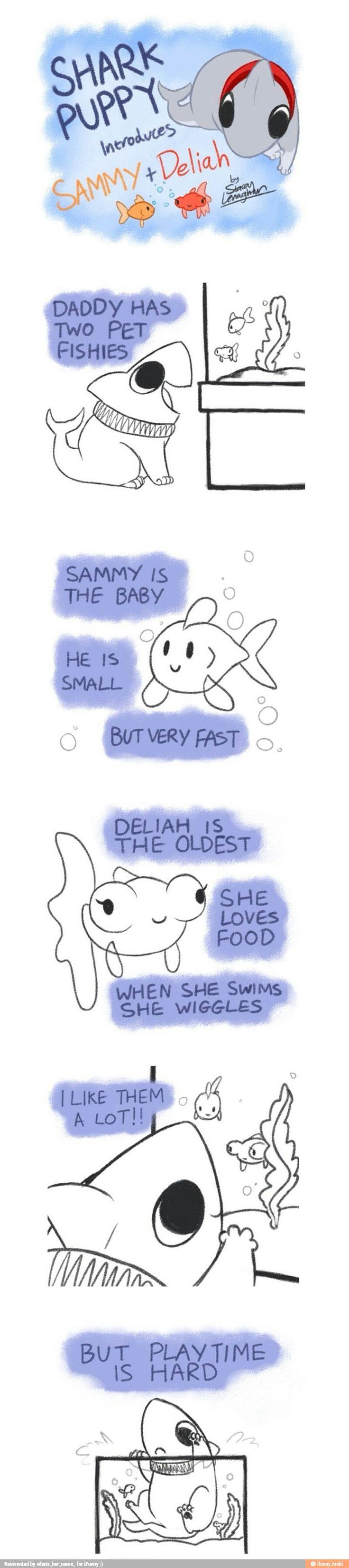 Shark puppy