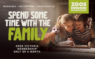 Become a member and get free entry 365 days a year, including interstate zoos, as well as great discounts on products and events.