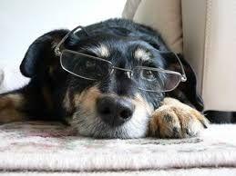 Resultado de imagem para riscos para bordar roupas de cachorro