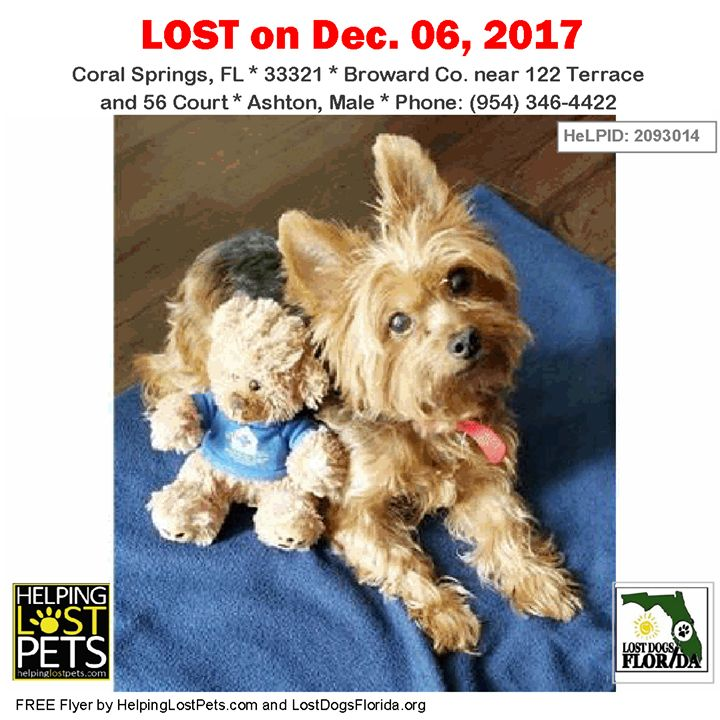 Pinterest - lost dog flyer template word