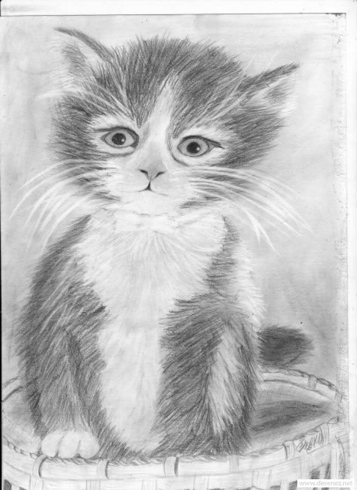 portret de pisica photo desen-creion-pisi.jpg