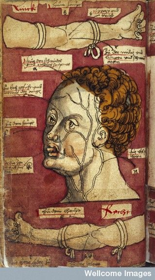 WMS 93. ARZNEIBUCH, Book of medical receipts, etc. A physicians handbook of practical medicine with notes on medical astrology, blood-letting, uroscopy, etc. in German. Some additions by several 16th century hands. 1524. Figure 6 showing veins in arm and head.
