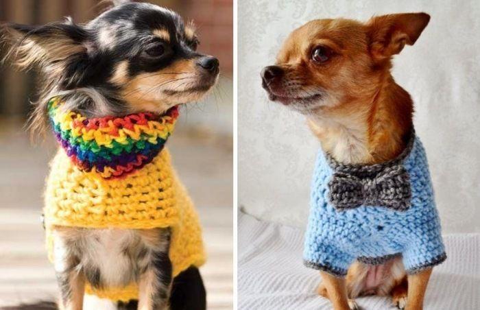 Hundebekleidung selber machen- Schutz vor Kälte und Wind                                                                                                                                                                                 Mehr