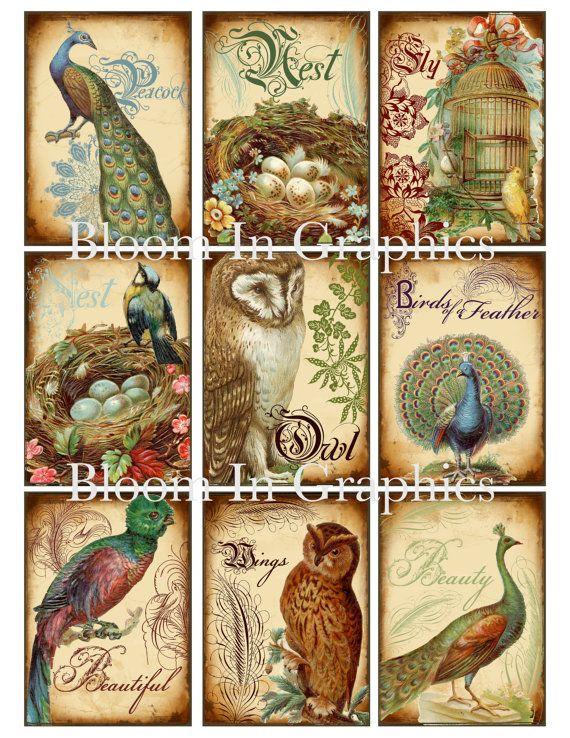 Botanical Bird ATC cards digital download