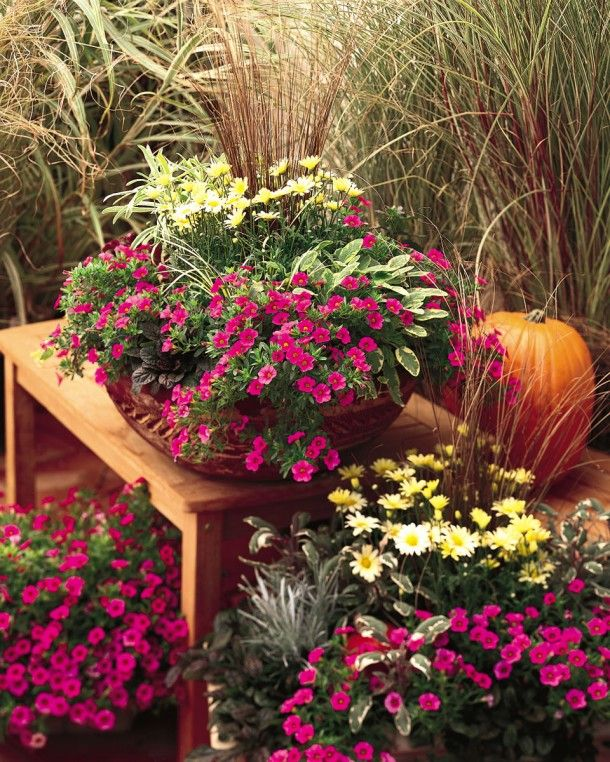 2751 Best Container Gardening Images On Pinterest