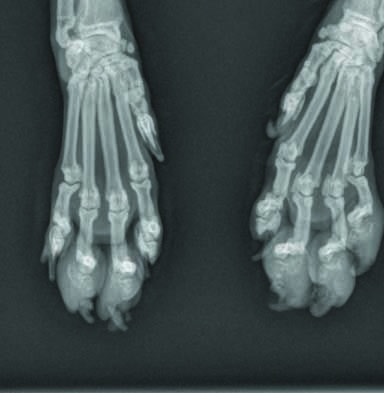 Radland: Swollen Toes