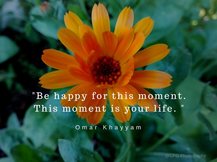Be happy for this moment. This moment is your life. Omar Khayyam https://photography.expoanunturi.ro/