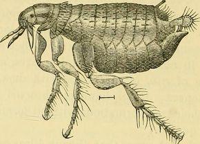 Flöhe? Hausmittel gegen Flöhe bei Mensch, Hund und Katze bekämpfen die Parasiten. Ob im Bett oder in der Wohnung, hier finden Sie die besten Flohmittel!