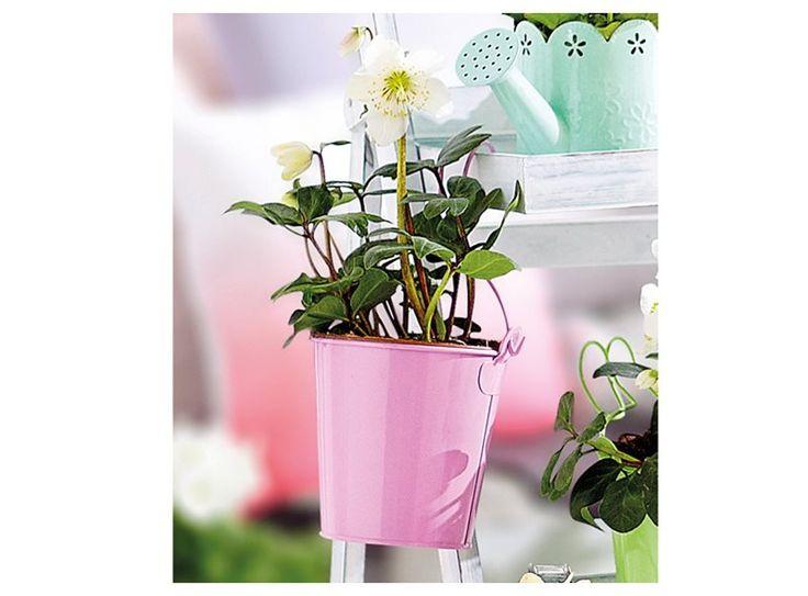Je kunt je voorjaarsbloemen in een bloempot zetten, maar dit zinken emmertje is eigenlijk veel handiger! Je kunt hem namelijk niet alleen neerzetten maar ook ophangen. Én hij is eenvoudig te verplaatsen. Verkrijgbaar in diverse kleuren.