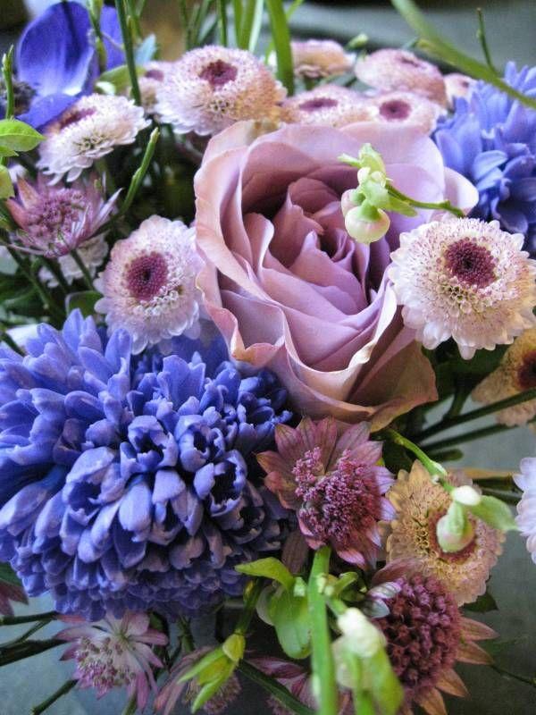 Anemon och hyacint i mörkblått, blommande blåbärsris, ljusrosa krysantemum och stjärnflocka och så en underbar askrosa ros