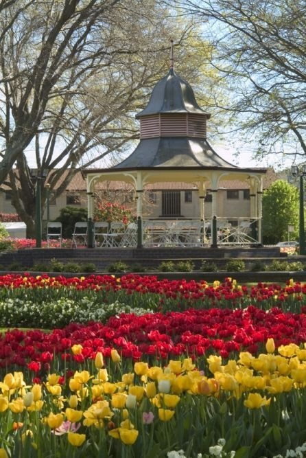 Tulip Time in Bowral is SO pretty. This shot is from Corbett Gardens where all the action takes place in Sept/Oct.