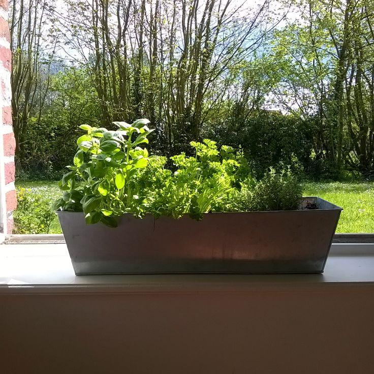 My home garden !