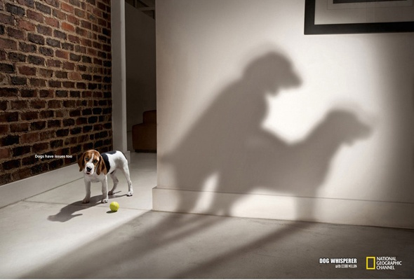 A series of photographs for the American TV show Dog Whisperer