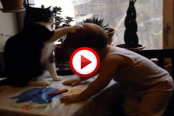 Cat soothing crying baby to sleep #animals, #cats, #cute, #funny, #videos, #videobox, #pinsland, https://itunes.apple.com/us/app/id508760385