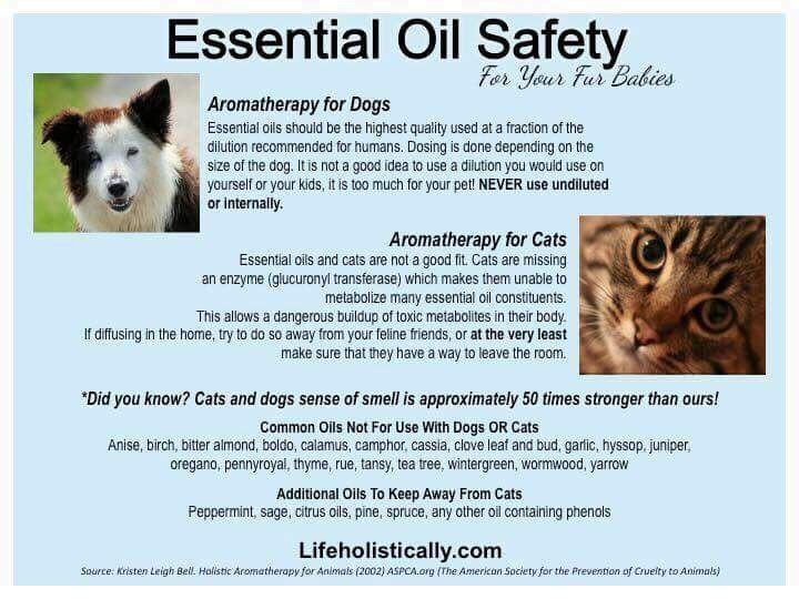 Do Not Diffuse Essential Oils Around Cats Essential Oil Safety Oils Aromatherapy For Dogs