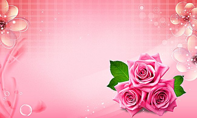 Beautiful Pink Roses Background Pink Roses Background Beautiful