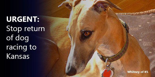 Petition · Kansas State Senate: Don't let brutal greyhound racing start up again in Kansas! · Change.org