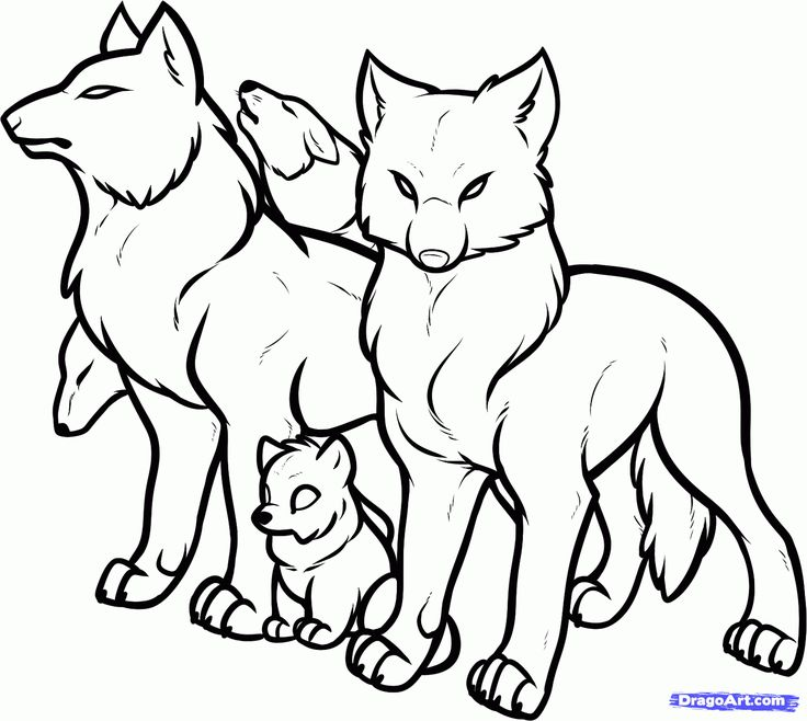 How To Draw A Wolf Pack Of Wolves Step 10 1 000000113319 5 1460x1306