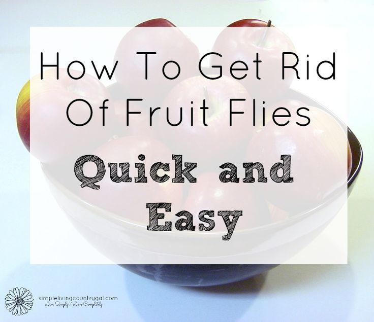 Best 25 Fruit Fly Spray Ideas On Pinterest Fruit Flies