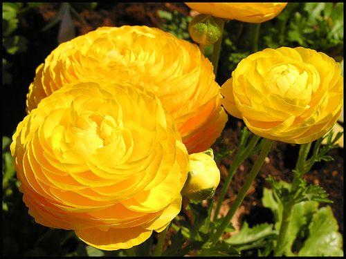 perennial garden ideas | Perennial Flower Garden Ideas | Garden Guides