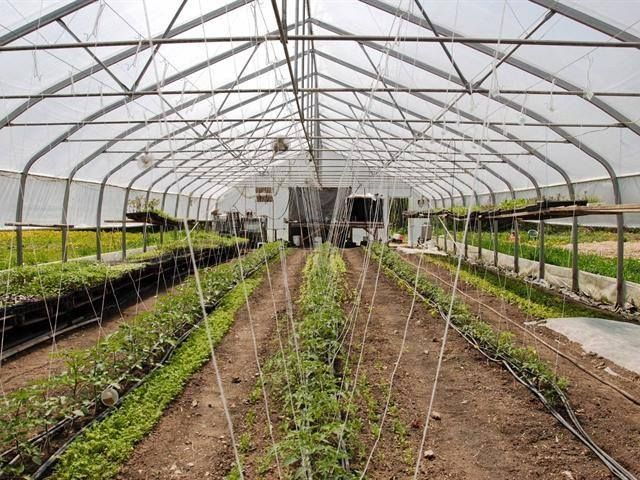 12 best images about gardens greenhouses on pinterest for Ecoflow septic system