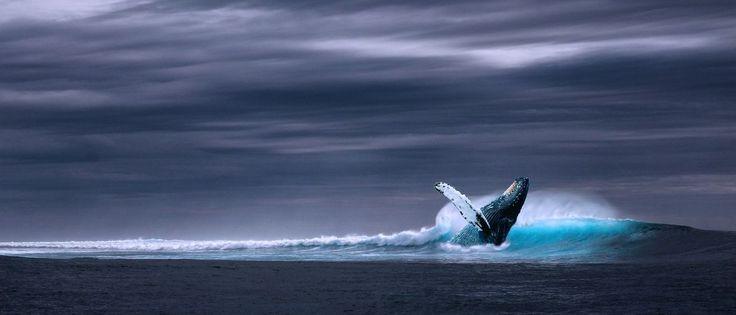Noticias ao Minuto - Boato sobre novo tipo de desafio da Baleia Azul viraliza na web