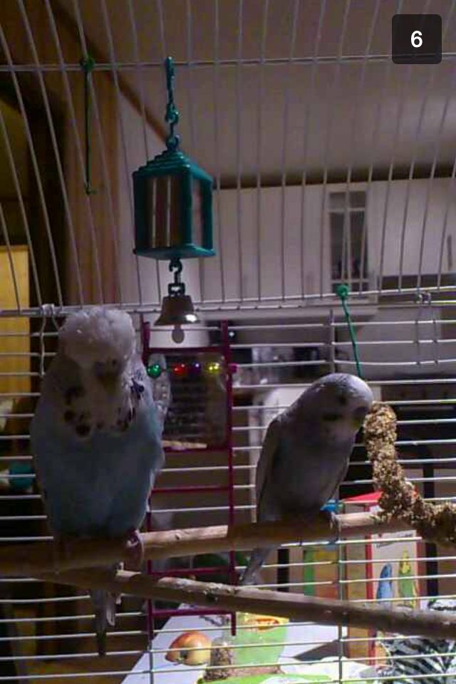 Blueberry and Phoenix ;)