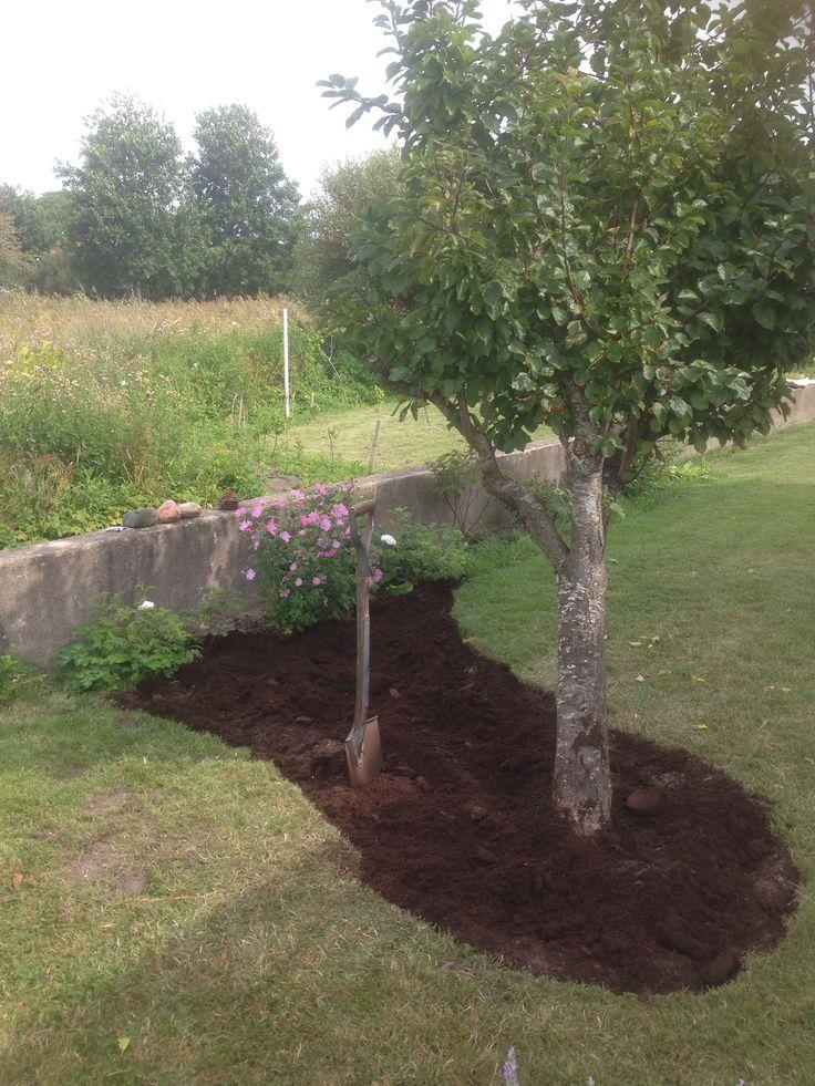 Ny rabatt på baksidan som ska fyllas med lavendel, iris, malvor, nävor, kattmynta och akleja. Nu tar jag av mig barfota som Ernst och börjar plantera ;)