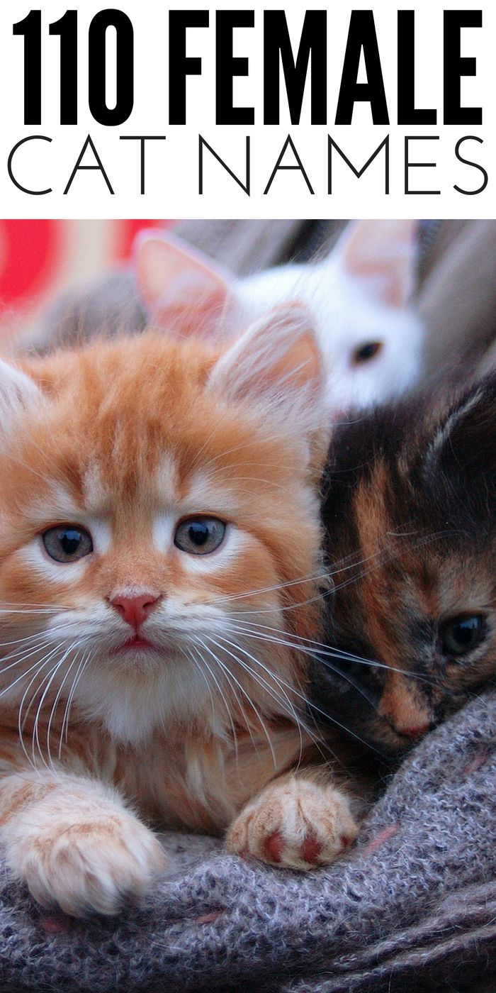 110 Female Cat Names To Consider For Your Next Feline In 2020