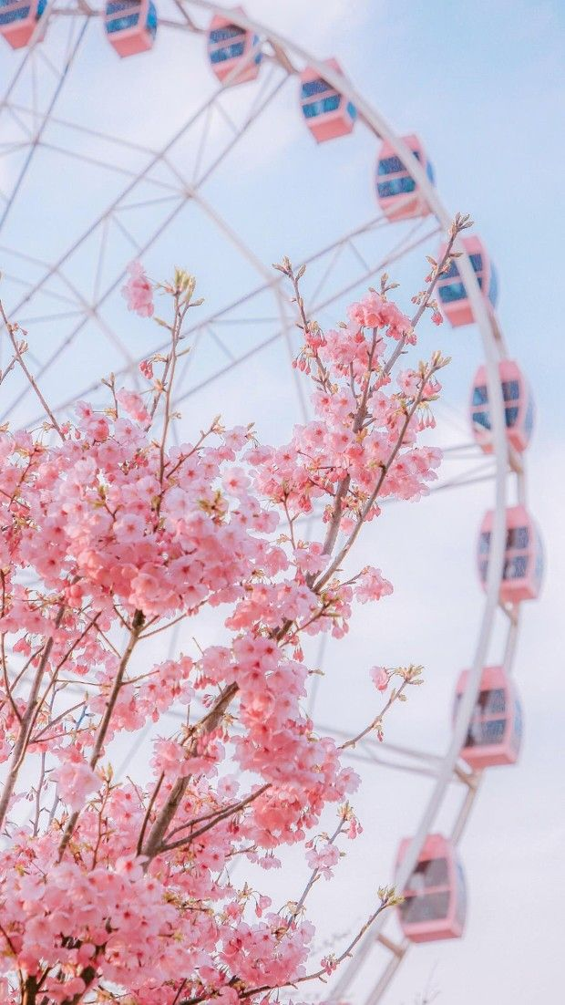 Pink Flower aesthetic and Ferris Wheel in beautiful garden