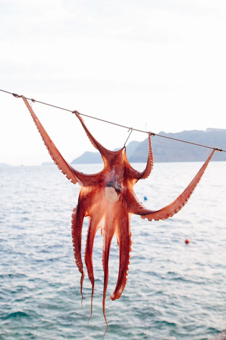 Sun-dried octopus in Ammoudi Bay, Santorini