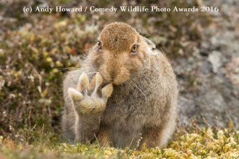 2016 Finalists :: Comedy Wildlife Photography Awards - Conservation through Competition (c) Andy Howard