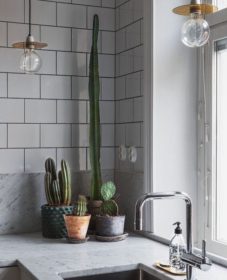 Cacti in the kitchen