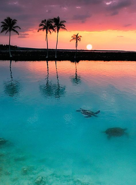 Sea turtles, palm trees and sunset trifecta